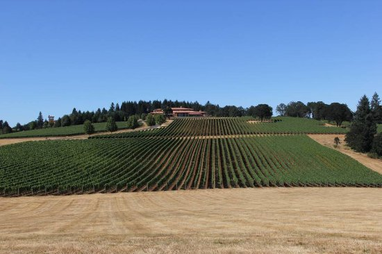 Dayton, Орегон: One of the nicest grounds I have seen outside Napa