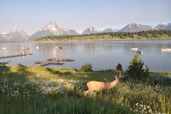 Signal Mountain Lodge : matin au lodge