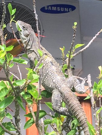 Chabil Mar: Loved the iguanas everywhere