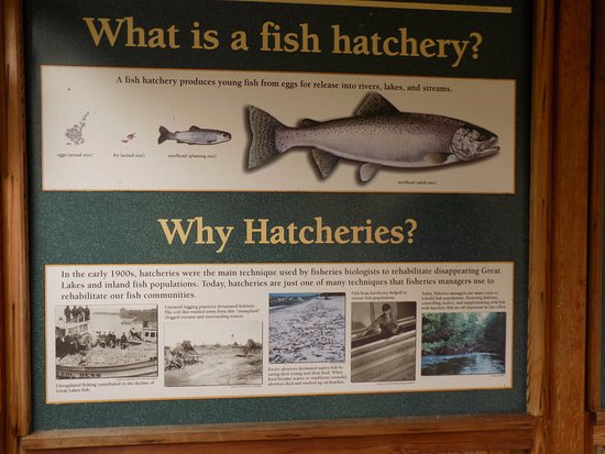 Thompson state fish hatchery manistique mi omd men for Fish hatchery michigan