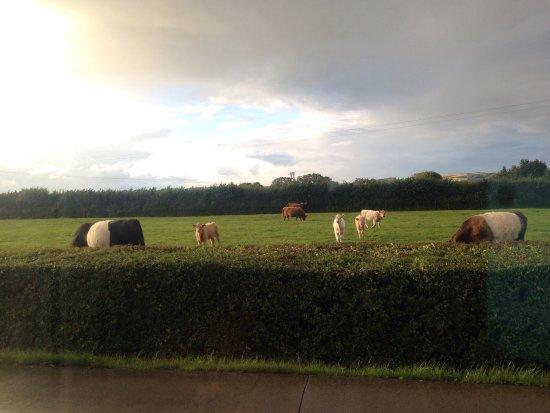 Dulhorn Farm Holiday Park Updated 2018 Campground Reviews Lympsham England Tripadvisor