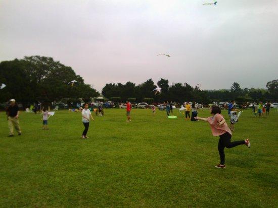Shimen Reservoir Grass Lawn: 喚起童年奔馳記憶的草坪