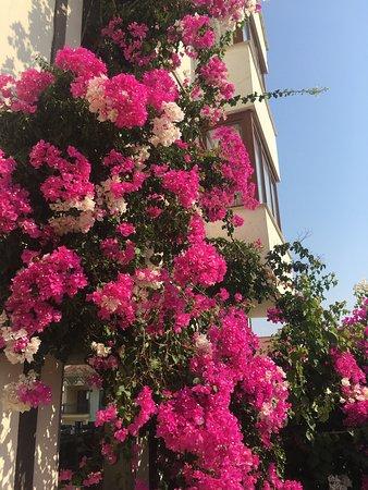 Doada Hotel: photo0.jpg