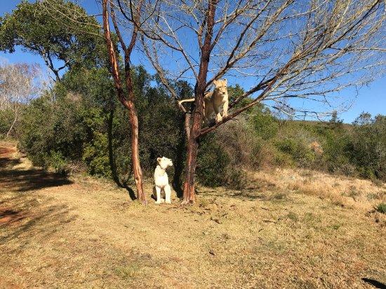 Zorgfontein Game Farm : photo1.jpg