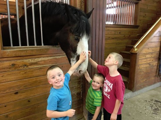 Yukon, OK: My three little boys petting a Clydesdale. As you can see, they love going.