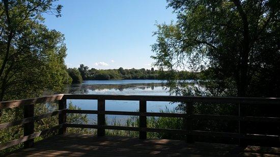 Nene Wetlands