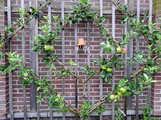 Utrechtse Heuvelrug, Nederland: apple tree