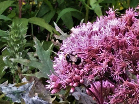 Dumbarton, UK: Busy Bee