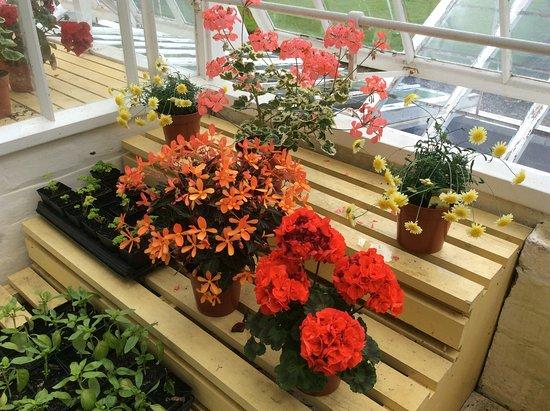 Dumbarton, UK: Colourful Greenhouse