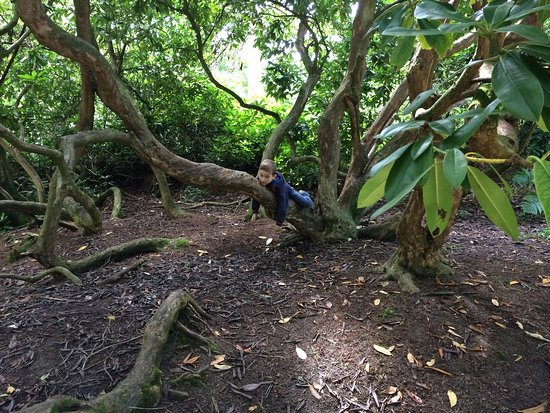 Belsay Hall and Gardens: Medieval activities and wonderful forest walks at Belsay.