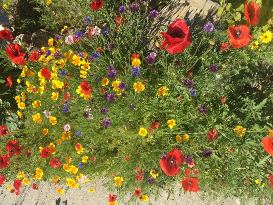 Mt. Burgess Guesthouse: Beautiful flowers