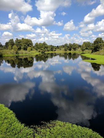 Lettuce Lake Regional Park: IMG_20170809_115834_large.jpg