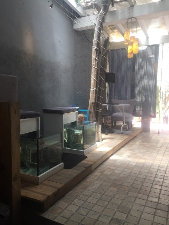 Aquam Fish Spa