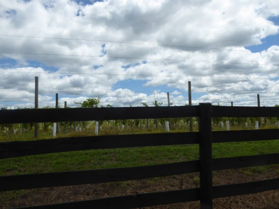 Leesburg, VA: Vines