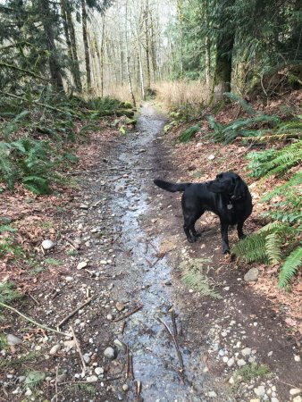 Sammamish, WA: Springtime after lots of rain. Usually a dry section of trail.