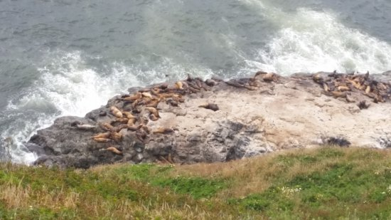 Florence, Oregon: Sea lions relaxing.