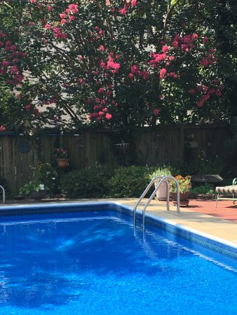Belle Hearth Bed and Breakfast: In ground pool