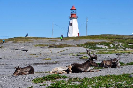 100 sites de rencontres gratuits en Nouvelle-Écosse