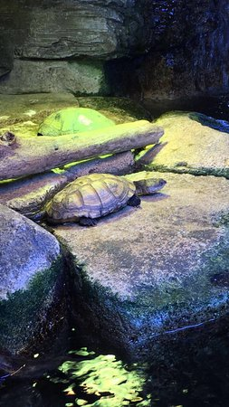 Picture Of Austin Aquarium Austin Tripadvisor