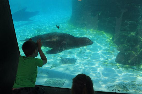 Pittsburgh Zoo & PPG Aquarium: seals. You can see them from above or below