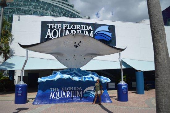 The Florida Aquarium : A few hours at the aquarium