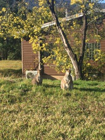 Dungog, Austrália: photo8.jpg