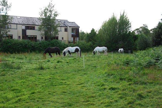 Sheen Falls Lodge: The Sheen Falls horses grazing nearby.