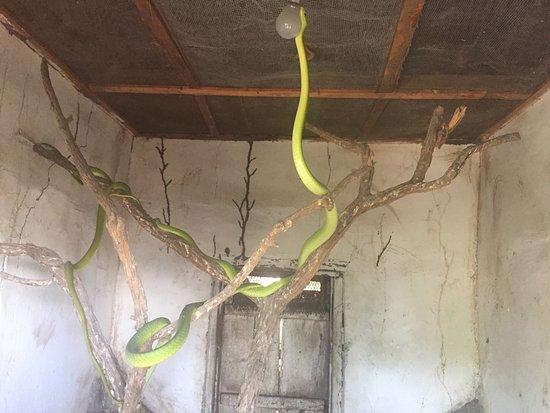 Morogoro, Tanzania: photo5.jpg
