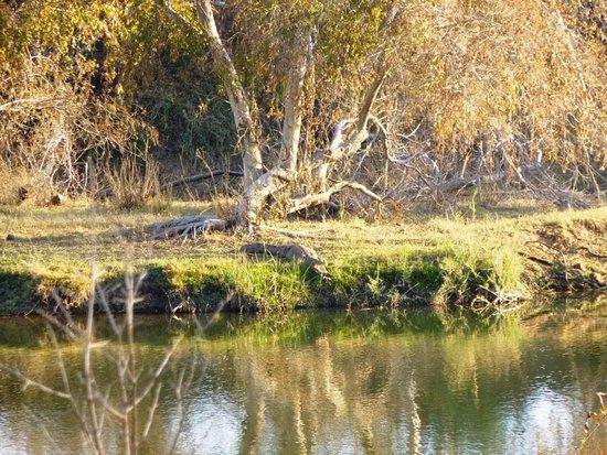 Bulge River, South Africa: Crocodile