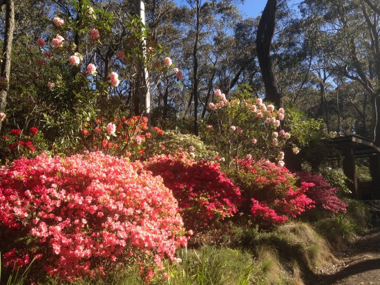 Blackheath, Australien: Rhodo Gardens