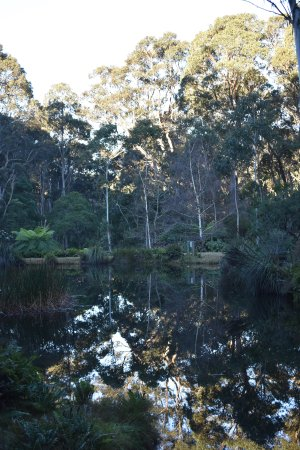 Blackheath, Australia: Rhodo Gardens