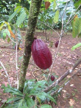 Horquetas, Costa Rica: photo3.jpg