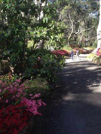 Blackheath, Australia: Rhodo Garden