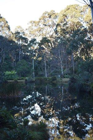 Blackheath, Australië: Rhodo Gardens