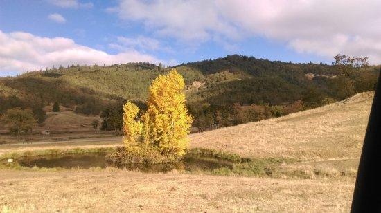Winston, Oregón: 山谷中一顆漂亮的樹