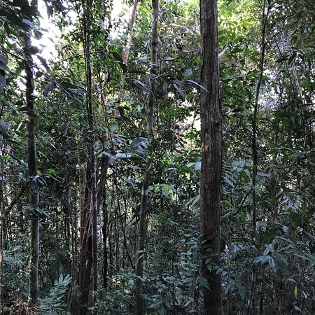 Taman Negara National Park, Malaysia: photo0.jpg