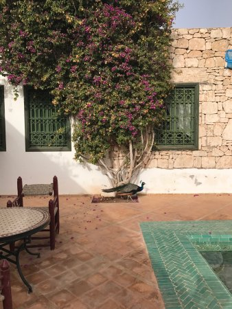 Billede af les jardins de villa maroc for Jardin villa maroc