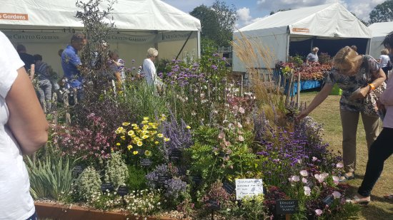 Chelmsford, UK: Flower show in August
