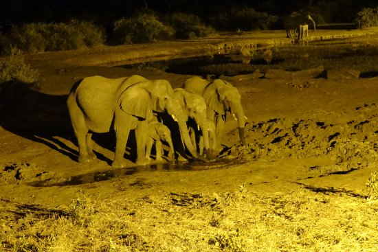 Elephant Valley Lodge: ... beim Abendessen!