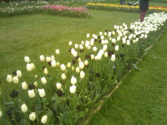 Groot-Bijgaarden, เบลเยียม: Floralie 1