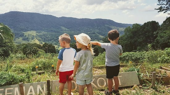 Currumbin, Australia: Kids enjoying the view at Freeman's Organic Farm.