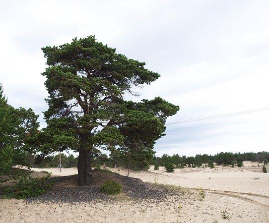 Kuzomen, Rosja: Пустыня