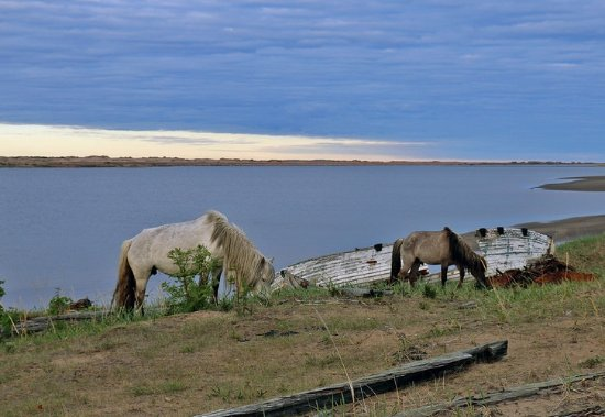 Kuzomen, Russia: Лошади