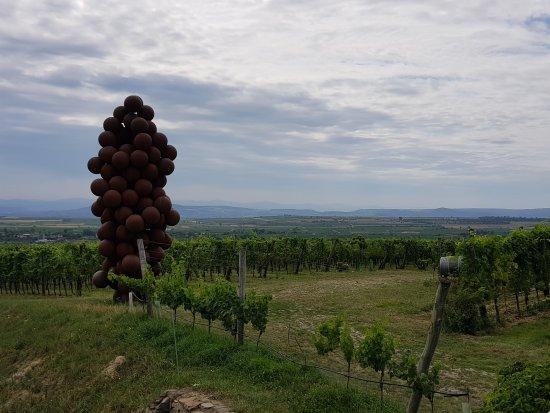 Langenlois, Österreich: 20170805_122446_large.jpg