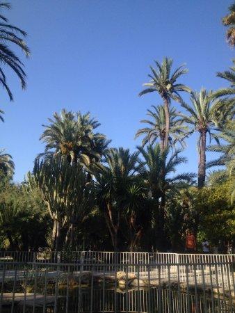 Palm Groves (Palmeral) of Elche: Après-midi promenade au parc 09/08/17