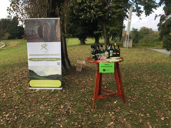 Ljutomer, Eslovênia: Vinogradnistvo Kovacic