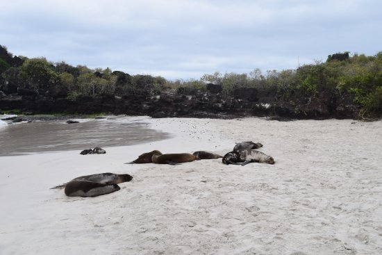 San Cristobal, Ecuador: Sea lions lounging at El Chino beach.
