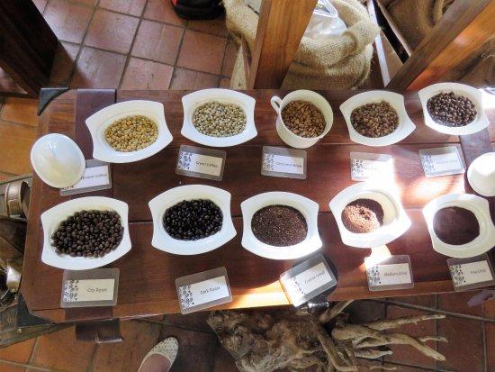 Arusha Coffee Lodge: coffee