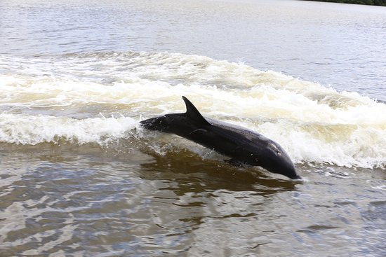 Dreamlander Tours: This beautiful dolphin wanted to play with us!