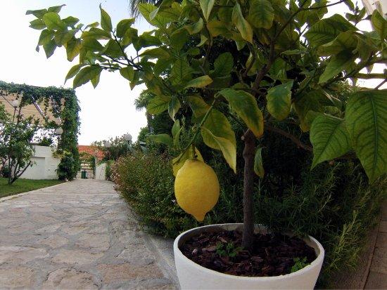 Villa Giardino: photo3.jpg